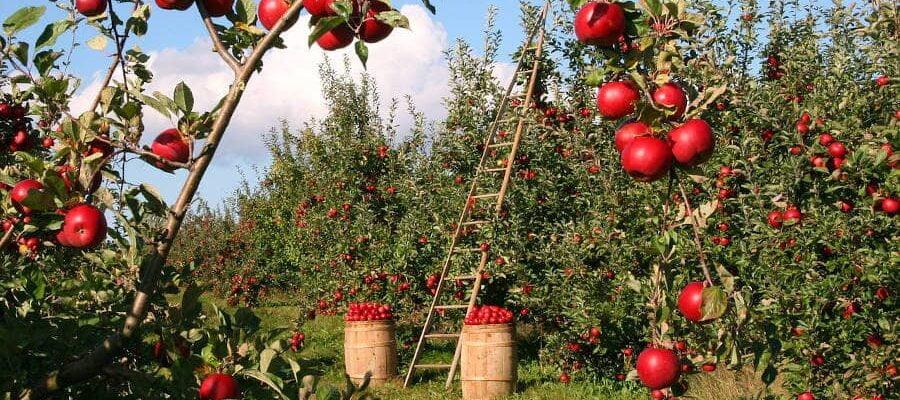 Slow Food Abruzzo (17 Presidi): ecco i cibi a produzione locale di cui andar fieri