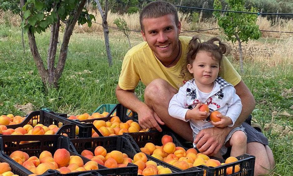 Albicocca frutto estivo con 3 ottime proprietà (e i consigli su come coltivare le albicocche)